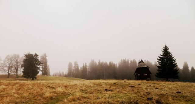 Zabljak highlands house tree