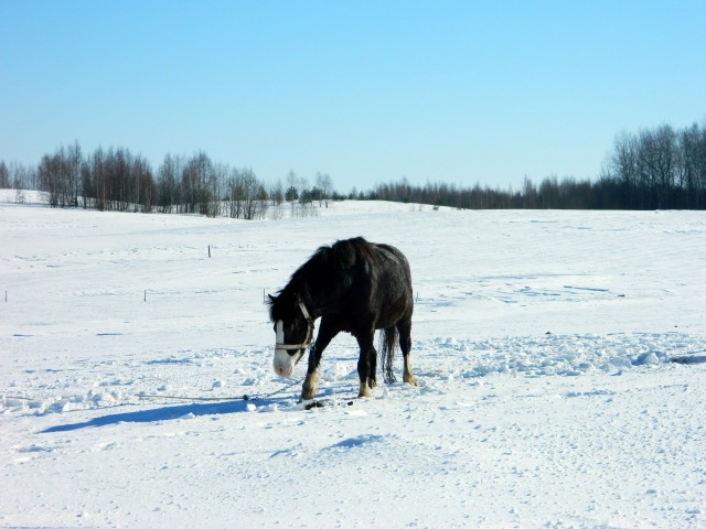 horse in snow 2