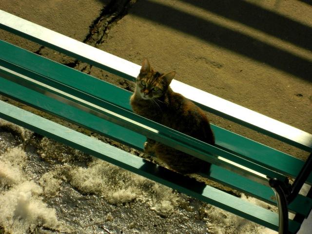 cat balcony 2