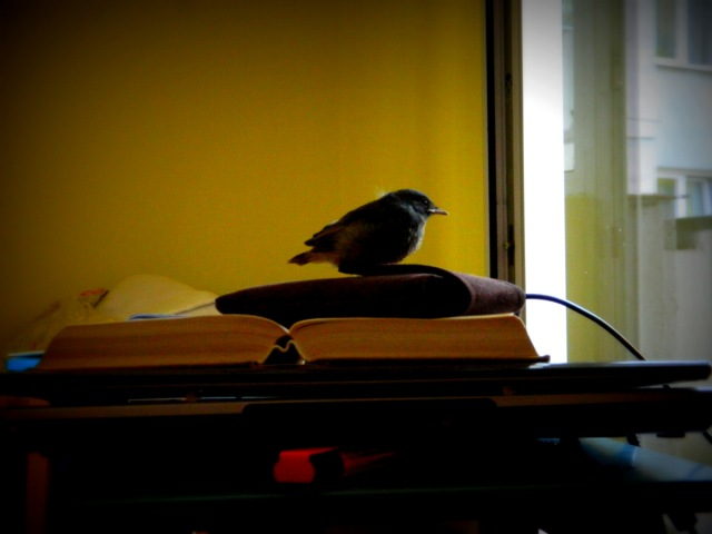 bird in office