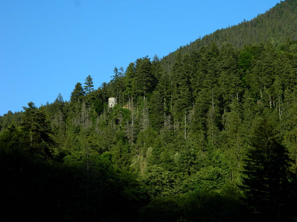 Turm im Wald