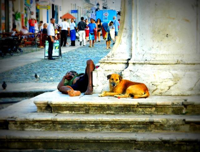Obdachloser Hund.JPG