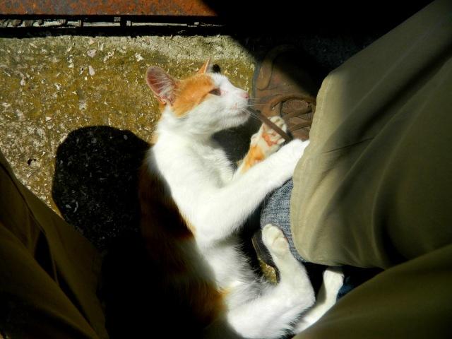 Katze Schnürsenkel.JPG
