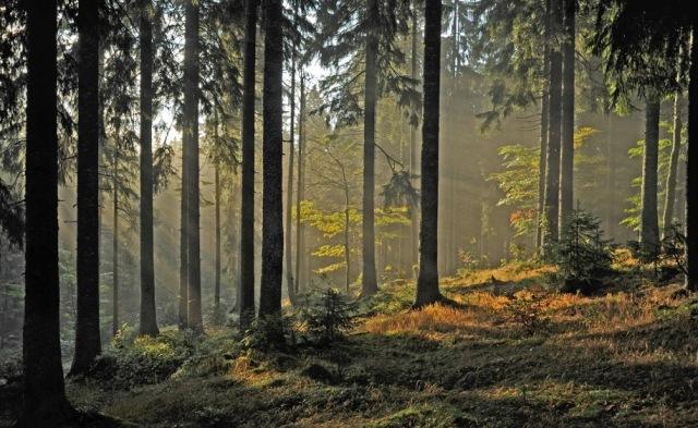 Herbstwald_DSC3278.jpeg
