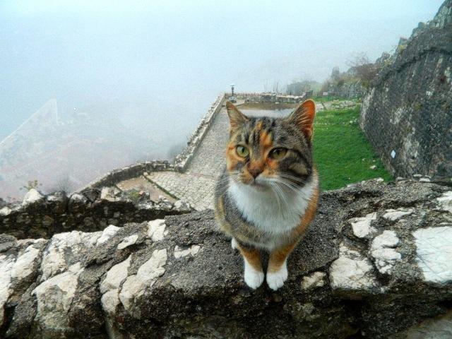 cat above Kotor 2.JPG