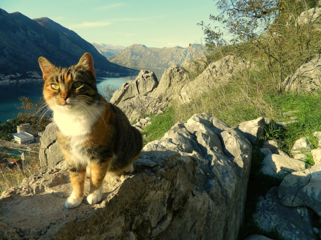 cat above Kotor.JPG