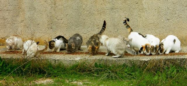Katzen2