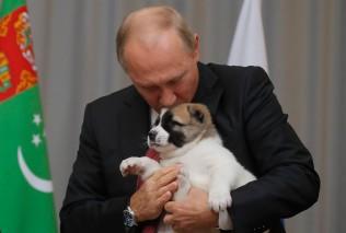 TOPSHOT - Russian President Vladimir Putin kisses a Turkmen shepherd dog, locally known as Alabai, received by Turkmenistan's President Gurbanguly Berdimuhamedov during a meeting in Sochi, on October 11, 2017. / AFP PHOTO / POOL / MAXIM SHEMETOVMAXIM SHEMETOV/AFP/Getty Images