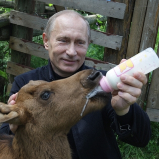Russian Prime Ministers Vladimir Putin gives feeds milk to a moose on June 5, 2010 during a visit to the Moose Island National Park in Moscow on the eve of World Environment Day. AFP PHOTO / RIA NOVOSTI / POOL / ALEXEY DRUZHININ (Photo credit should read ALEXEY DRUZHININ/AFP/Getty Images)