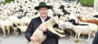 Söder Schaf