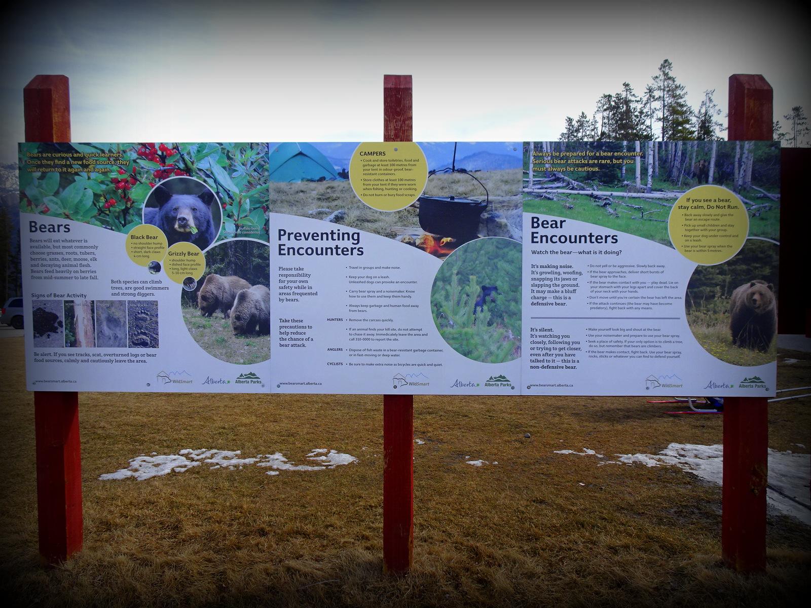 bear warning Banff.JPG