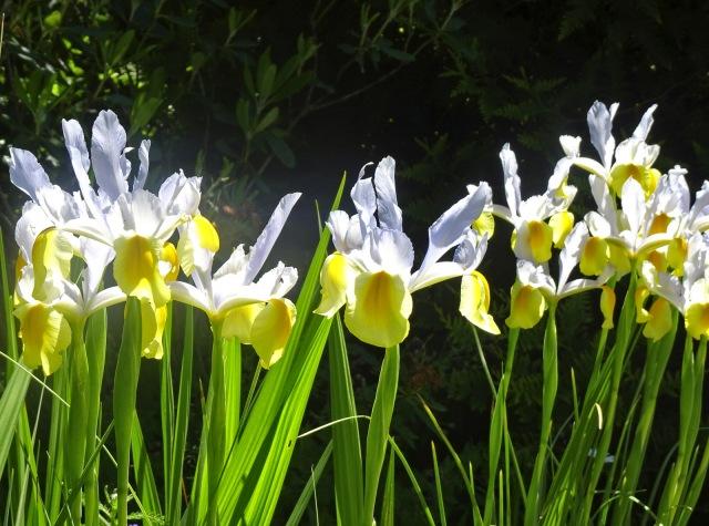 Blumen1