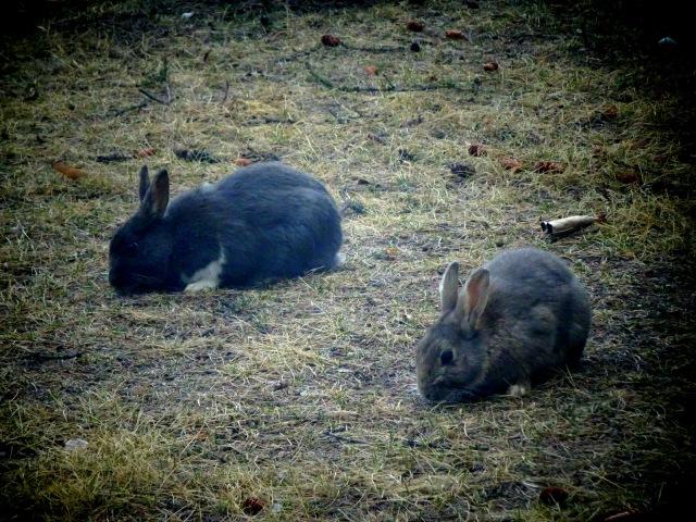Kaninchen (3).JPG