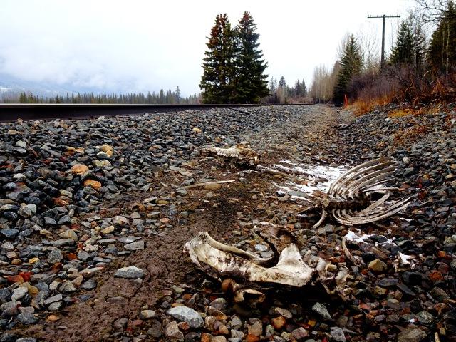 Skelett Bahnlinie