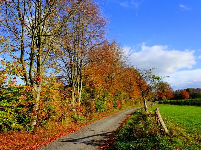 Allee Herbstfarben 1