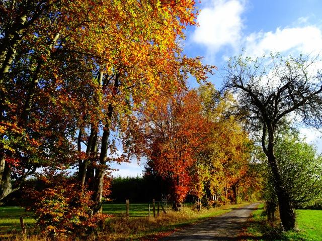 Allee Herbstfarben 2