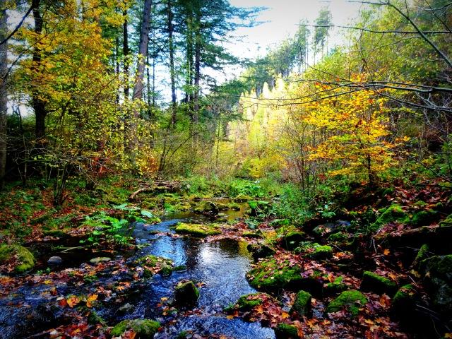 Bach mit Herbstfarben 1