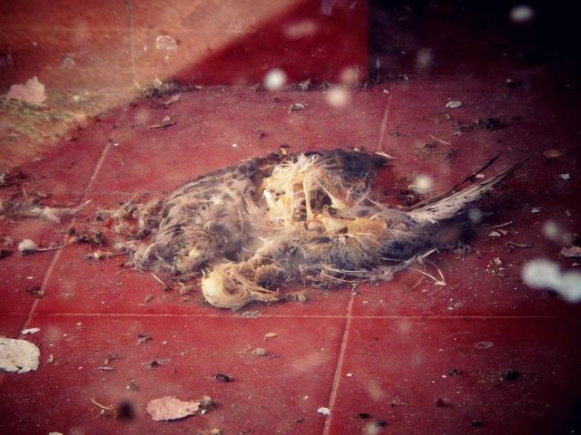 Hotel Pico dead bird