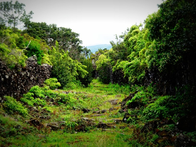 lava path (2)