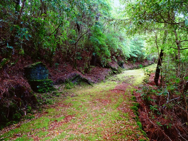 path with moss